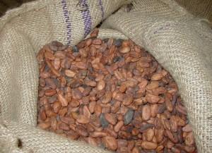 fave-di-cacao
